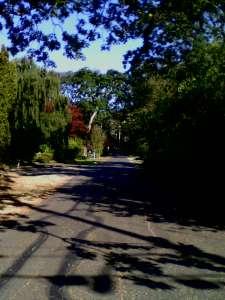 Beckoning Road
